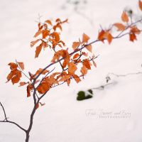 Winter Leaves by FurImmerUndEwig