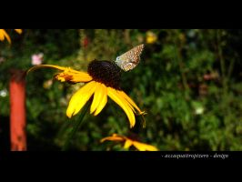 Butterfly - 2 by accaquattropizero