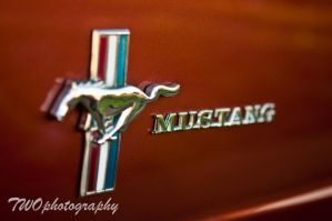 Stang by TWOphotography