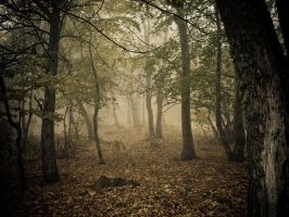mystical woods by niksa88