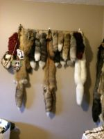 Fur traders room part 2 by WylderTaxidermy