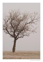 wintertree by fade-out