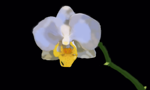 MangleOrchid (Digital Painting) by MangleOrchid