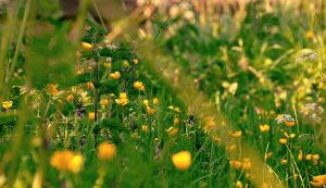 Spring wild flowers by younghappy