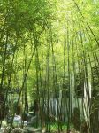 bamboo by ree-