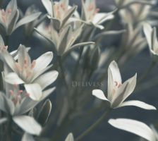 White Flowers by delivess
