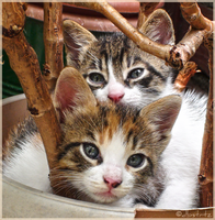 Two Of Us by dbstrtz