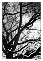 gloomy winter branches by Niemans