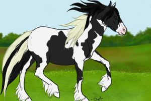 gypsy vanner by karkat-the-owl