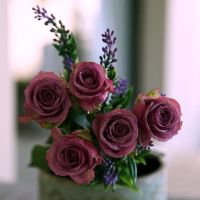 Love Roses by WhiteBook