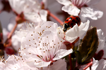 Ladybird in Spring by xDewdropx
