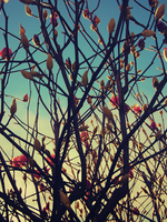 Branches 3 by Humble-Novice