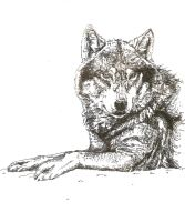 .: Wolf Indian ink :. by Seppyo
