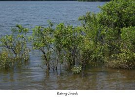 lake and plants -stock by Rainny-Stock