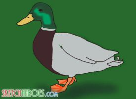 duck by SketchHeroes