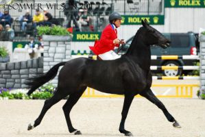 removed tack warmblood by suuslovertje