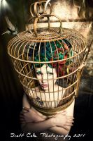 bird cage with hummingbird by Ryo-Says-Meow