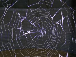 Spider Web by Book-of-Light-Stock