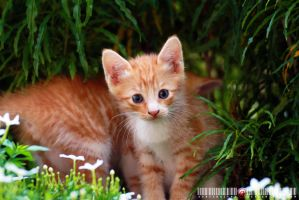 Kitten And Flower 1.2 by adrianhefni