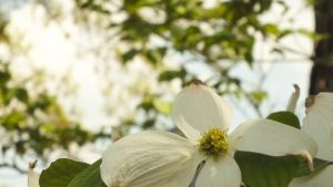 Point State Park White Flowers by mjb1225