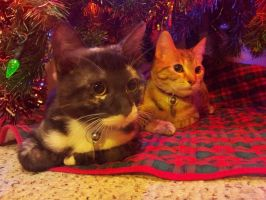 Kitties' First Christmas by PurryProductions-Inc