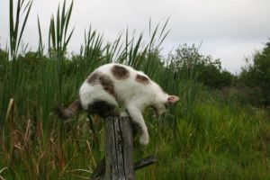 Cat pose stock by black-cat16-stock