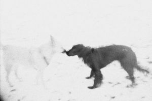 ghost dogs. by olainturrupted