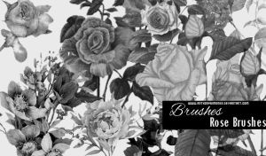 Brushes - Roses by AnthonyGimenez