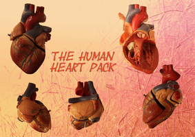 Human Heart Collection by tamaraR-stock