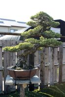 bonsai 08 by secede0