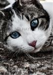 Blue Orbs by photographygrl