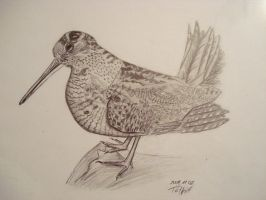 Woodcock by andrew0807