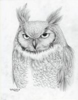 Great Horned Owl by CallieFink