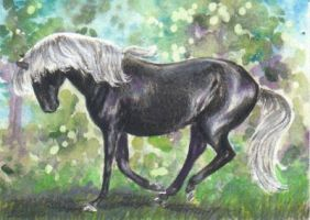 Zolien ACEO by In-The-Distance