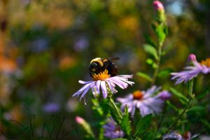 Bumble bee by plantm
