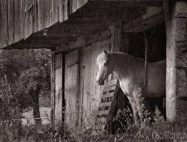 girls like horses by scottchurch