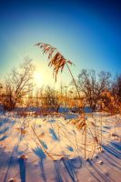 golden winter 1 by Ibicusun