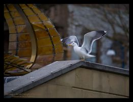 Taking Flight by GMCPhotographics