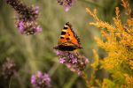 117. butterfly III by littleconfusion