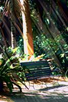 In the shade of the Parklands by Bluebuterfly72