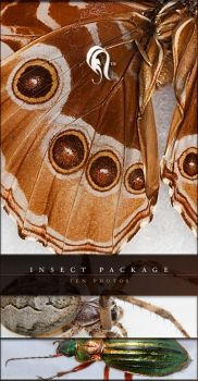Package - Insect - 2 by resurgere