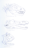 Some theropods skulls by Weirda208