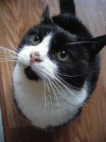 ...and his black and white Cat by make-a-snappy