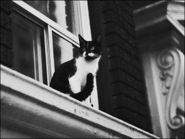 Cat by panfoto