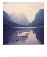 Swans polaroid by Chanae