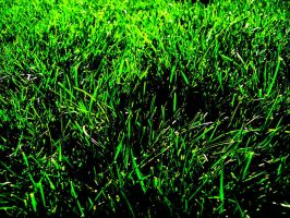 Grass by JakybliS