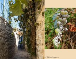 Vines in Tsfat by ShlomitMessica