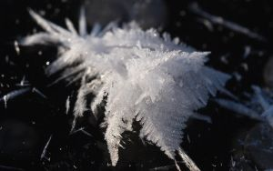 Frost 6 by Henrikson