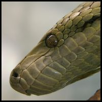 Snake Eye by Caelitha