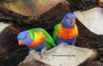 Mr and Mrs Parrot by freepictures